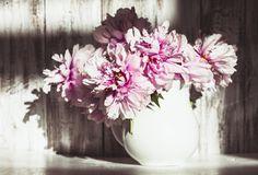 Clateste-ti ochii cu 20 de poze cu flori de primavara, care iti vor face ziua mai frumoasa!