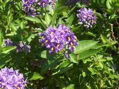 Flowers from Ireland
