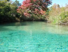 Florida Paddling Adventures at Weeki Wachee Springs & Ichetucknee Springs
