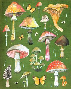 Mushroom Chart Print  Fungi Identification  by thewheatfield