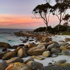 Bay of Fires seems a fitting name for the stretch of pristine white sands that lie between Binalong Bay and Eddystone Point on Tasmania's north east coat. The orange-tinged stones scattered along the beach lie in stark contrast to the turquoise waters and surrounding bushland.