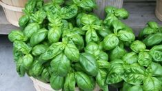 Korn, Pesto, Diy And Crafts, Vegetables, Gardening, Basil, Remedies, Naturaleza, Plants