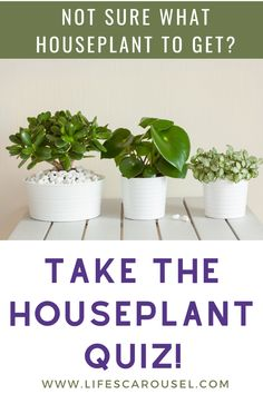 Not sure which type of houseplant to get? Take this houseplant quiz to find your PERFECT match! Answer these easy questions to find the right plant for you! Colorful Plants, Cool Plants, Green Plants, Indoor Plants, Indoor Gardening, Potted Plants, Growing Vegetables Indoors, Types Of Houseplants, Easy Plants To Grow