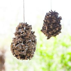 Pinecone Bird Feeder - we also use toilet paper rolls or cut paper towel rolls.  We also use sunbutter as we are a nut free center!