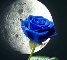 69 Mejores Imágenes De Rosas Azules En 2019 Blue Roses Beautiful