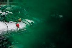 📸 Fruits contrast strawberry focus - new photo at Avopix.com    ☑ https://avopix.com/photo/39748-fruits-contrast-strawberry-focus    #swimmer #scuba diver #athlete #diver #contestant #avopix #free #photos #public #domain