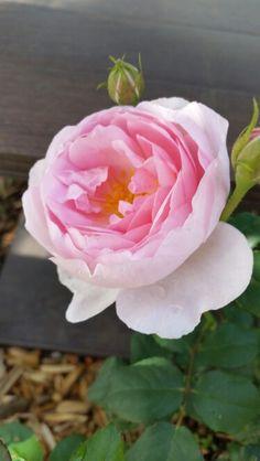 From my own garden