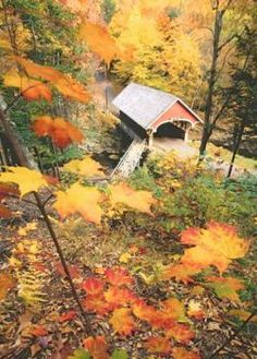 Covered bridge in the fall!
