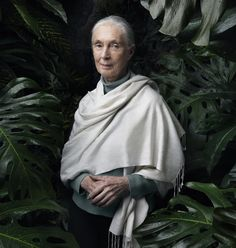 I'm always pushing for human responsibility. Given that chimpanzees and many other animals are sentient and sapient, then we should treat them with respect. - JANE GOODALL. Happy birthday!!!!