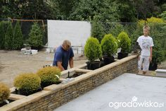 Zimozielony ogród przy białym domu - strona 27 - Forum ogrodnicze - Ogrodowisko