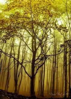 Foreste, Camaldoli, Tuscany, Italy