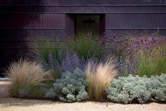 trawy w ogrodzie aranżacje - Szukaj w Google