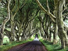 The Dark Hedges, County Antrim, Northern Ireland.