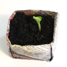 Fold your own seed starter box with newspaper.