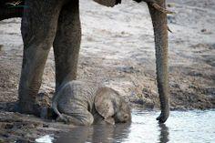 Awwwwwww............ baby drinking