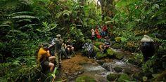La Amistad Reserves National Park, Costa Rica & Panama