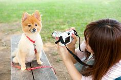 woman photographing dog