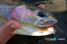 How hot is your fly? Here are 5 quick tips on flies for trout this spring.