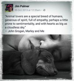 John Grogan, Jim Palmer, Marley And Me, Dog Cat, Memes, Cats, Animals, Gatos, Animales