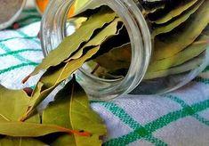 Plant Leaves, Portal, Plants, Blog, Diy, Ideas, Witches, Magick, Bricolage