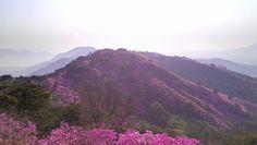 cherry blossom mountain - Google Search