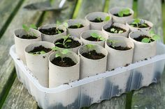 make seed starter pots from toilet paper rolls