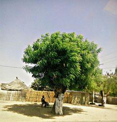 Woman Under the tree. Kaolack #senegal