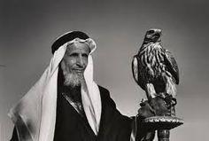 Resultado de imagem para arabian falconry