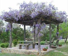 My next big garden project