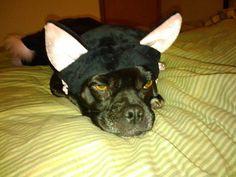 Mack says I am not a Cat!