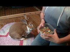 How To Teach Your Rabbit Tricks! - YouTube