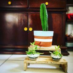 Última chamada para cactos e suculentas. Corre que ainda tem para o dia das mães. #oitominhocas #presentecriativo #diadasmaes #suculentas #cactus #cactusysuculentas #vasogilberto #maisverde #maiscor #maisamor