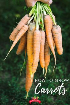 Learn how to grow carrots from seed the best way in your vegetable garden, raised bed, or container garden. Find tips and helps for growing carrots right at home! gardening for beginners Autumn Garden, Spring Garden, Gardening For Beginners, Gardening Tips, When To Plant Garden, Container Gardening Vegetables, Vegetable Gardening, Growing Carrots, Herb Garden Design