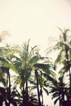 Johan+Francoise/ Paradise/ Home/ Motherland/ palm trees/ sunshine