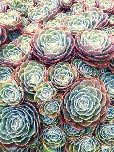 Succulents #RichardRivera