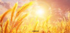 Golden Background, Beauty Background, Black Background Images, Wheat Vector, Wheat Decorations, Plan Image, John William Godward, Banner Design, Food Graphic Design