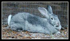 Choc-O-Lata & Rosco #bunny #rabbit #rescue #gainesville