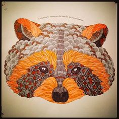 Animal Kingdom Colouring Book Ideas