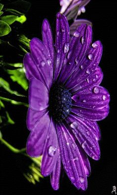 Foto animada Attractive Wallpapers, Flowers Gif, Beautiful Flowers Pictures, Beautiful Gardens, Flower Arrangements, Seeds, In This Moment, Purple, Plants