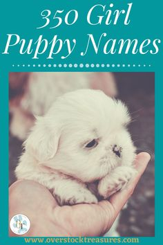 Hello pet lovers, dog lovers, dog owners and puppy owners. Are you a new pet owner? Did you just get a cute puppy or cute dog? Congrats! I created a list of unique dog names girl list. You are welcome to have my wonderful list of dog names girl unique list. This list is also for dog girl names for puppies. They are cut and unique puppy names female dogs.#puppy #puppynames #names #dognames #dog #doglove Puppies Names Female, Puppy Names, Cute Puppies, Cute Dogs, Unique Cat Names, Pet Loss Grief, Famous Dogs, Dog List, Cat Memorial
