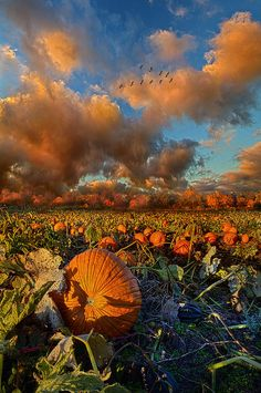 The Survivors Photograph by Phil Koch