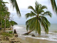 Von Brandung umspülte Palmen an einem einsamen Strand im Cahuita Nationalpark.