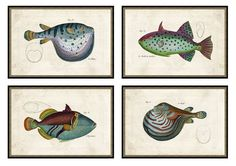 Large Tropical Fish prints