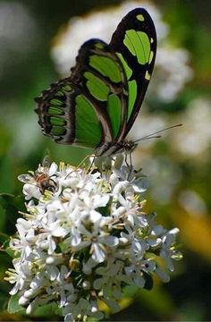 Green and Black Butterfly on Tumblr