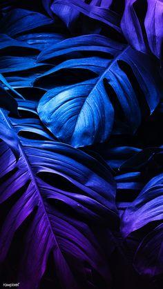 Leaves Wallpaper Iphone, Look Wallpaper, Flower Phone Wallpaper, Phone Screen Wallpaper, Purple Wallpaper, Cellphone Wallpaper, Wallpaper Backgrounds, Leopard Wallpaper, Plante Monstera