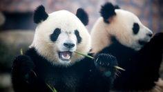 Asian wildlife tours sound awesome!