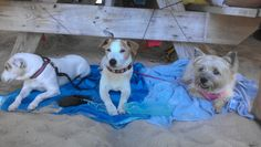 Honey Brown, Harry Brown, my Murphy at Pete's Pub, Little Harbour, Abacos, Bahamas