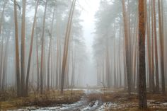 https://flic.kr/p/KUVzFC   Spring landscape. Lost among the fog and pine trees in the forest.