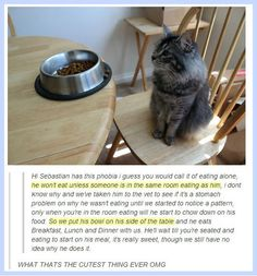 Aww! See!!! Not all cats are jerks!