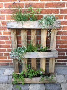 Lemon Lime Nandina, Sweet Potato Plant, Ornamental Kale, Fountain Grass, Fall Containers, Potato Vines, Decoration, Decor Diy, Autumn Display